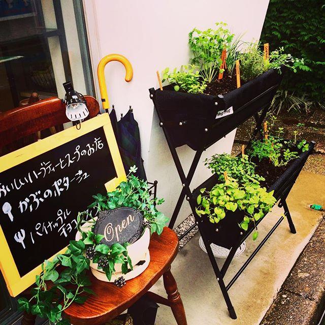 ハーブたちがやって来たガーデンセラピーの花音さんにお願いしていたおしゃれなハーブの寄せ植えが葉の園のお店の前に設置されました。これからひとつひとつお料理の中で活躍していきます。タイム、イタリアンパセリ ペパーミント チャイブなどなど要望を聞いてくださり、またぜーんぶオリジナルでアレンジしてくださいました!素敵なお店のディスプレイにもなって大満足です❣️ 花音さん。本当にありがとうございました#埼玉カフェ#葉の園 #店づくり #hanoen #ハーブの寄せ植え #ハーブ #ガーデンセラピーの教室花音 (Instagram)