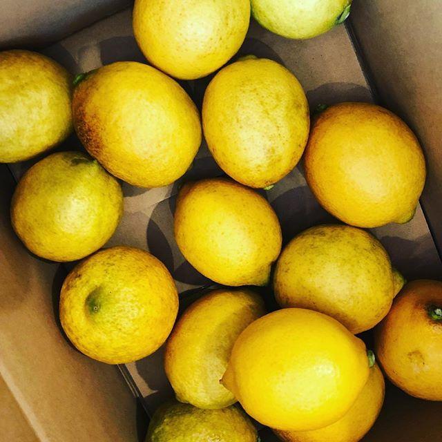 B級品といえども、立派な無農薬レモン。何を作ろうか、ワクワクします。まずはレモンピールかしら。#無農薬レモン #レモン???? #何を作ろうかな (Instagram)
