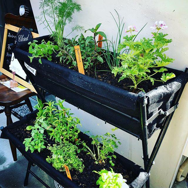葉の園のプランター、見事に復活️これで道行く人々に心配されなくなったわ。笑。花音の堀さんありがとう。そして今後もよろしくおねがいしまーす。#ハーブプランター #春の寄せ植え #バジル #ディル #パクチー #花音 #上尾 #葉の園 #ハーブカフェ #ハーバルスープ #ハーブショップ (Instagram)