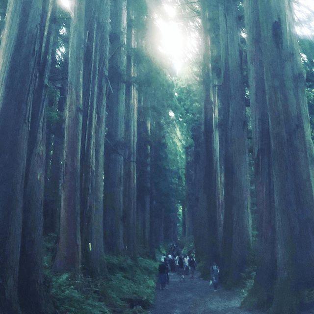 奥社までの参道途中にある杉並木は圧巻。人生で一度見ておいてよかった。#戸隠神社 #奥社 #杉並木 #圧巻 (Instagram)