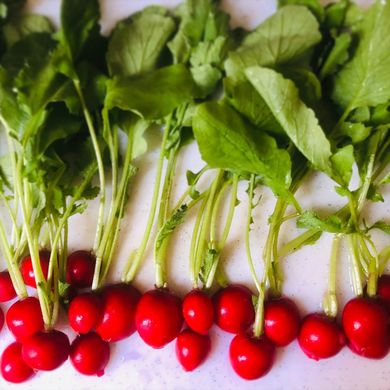 ラディッシュなんか、かわいい#地場野菜 #グリル焼き #シンプル #塩胡椒のみ #採れたて野菜